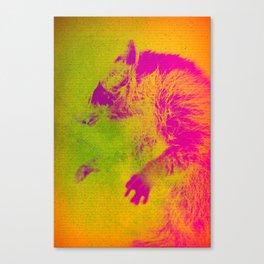Le Raton Laveur Canvas Print