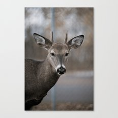 Minnesota North Shore #10 (Deer) Canvas Print