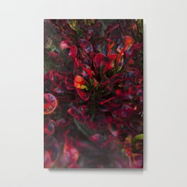 Croton in Red Metal Print