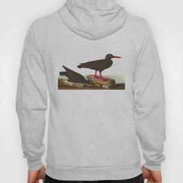 White-legged Oyster-catcher, or Slender-billed Oyster-catcher Bird Hoody