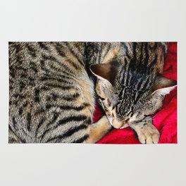 Cute Tabby Cat napping Rug