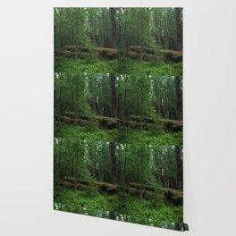 Fallen Tree in The Dense Forest Wallpaper