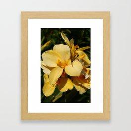 Canna Framed Art Print