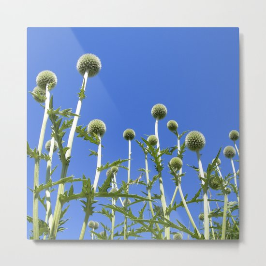summer thistle IV Metal Print