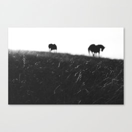 Horses on horizon Canvas Print