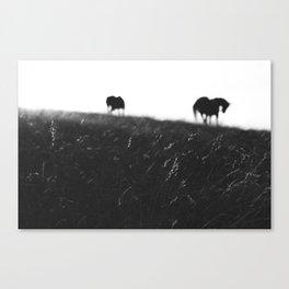 Horses on horizon Canvas Print