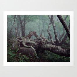 Mountains-to-Sea Trail, North Carolina. Art Print