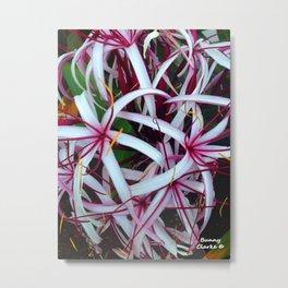 Spider Lilies Metal Print