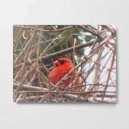 Chilly Cardinal 2 Metal Print