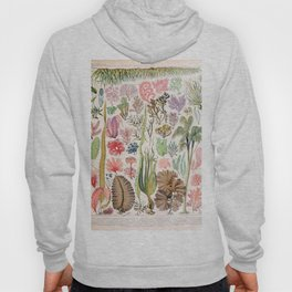 Adolphe Millot - Algues - French vintage poster Hoody