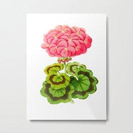 Vintage Botanical Illustration Beautiful Pink Flower With Lush Green Leaves Scientific Floral Illust Metal Print