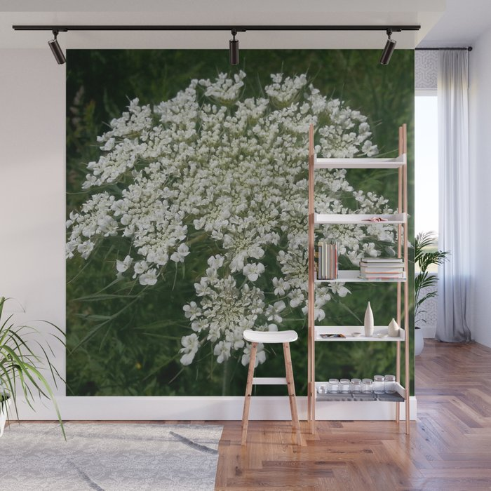 Queen Anne's Lace 3 Wall Mural