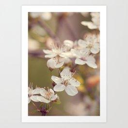 Blooming spring tree Art Print