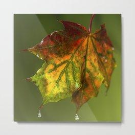 Sugar Coated Maple Leaf Metal Print