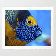 Blue-faced Angelfish Art Print