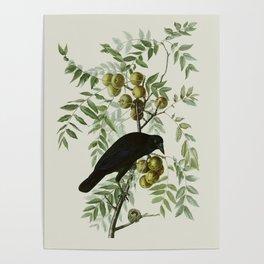 Vintage Crow Illustration Poster