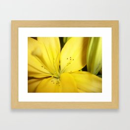 Yellow Tiger Lily Framed Art Print