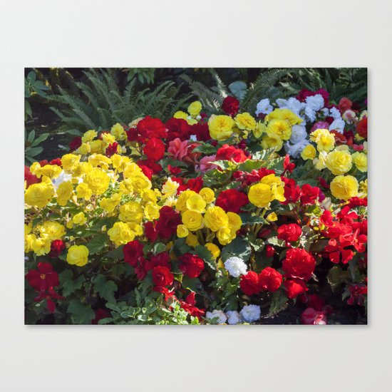 Begonias in Flower Canvas Print