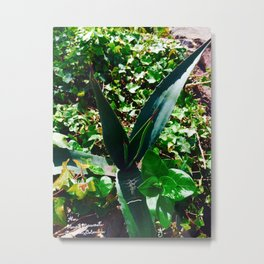 Aloe Vera at the top of Mount Monserrate in Bogota, Colombia Metal Print