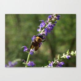 Bumble Bee on purple Canvas Print
