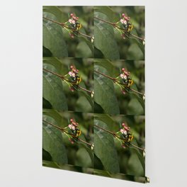 Photograph of a bee collecting nectar in a local park Wallpaper