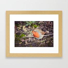 Rocking Robin Framed Art Print
