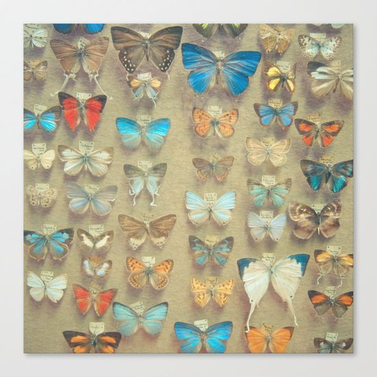 The Butterfly Collection II Canvas Print