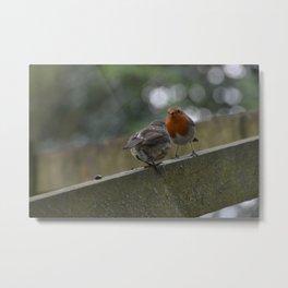 Robins fencing Metal Print