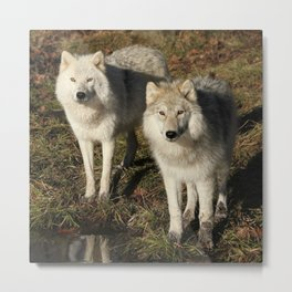 Pick of the Pride Metal Print