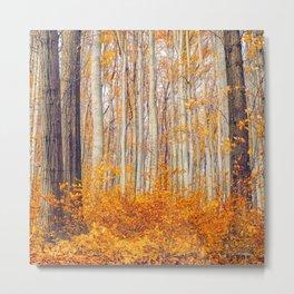 Golden Autumn Forest (Color) Metal Print