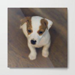 Little puppy dog Metal Print