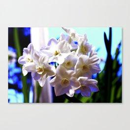 Paperwhite Narcissus Canvas Print
