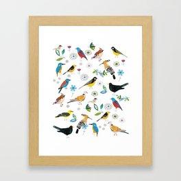 Polish birds Framed Art Print