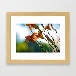 Morning Lilies - Canadian Raised Framed Art Print