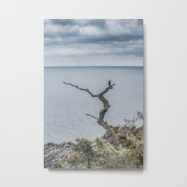 Baltic Sea Lonely Tree  Metal Print