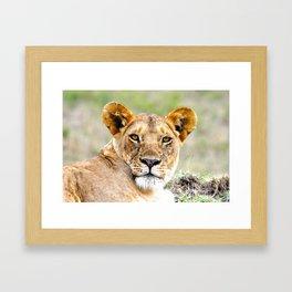 Marsh Pride Lion Framed Art Print