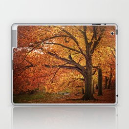 Oak Trees Laptop & iPad Skin
