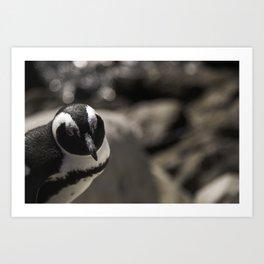 South African Penguin Art Print