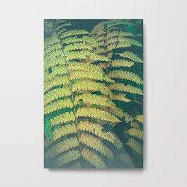 Woodland Fern Metal Print