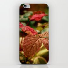 Tourmaline iPhone & iPod Skin