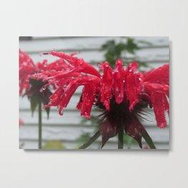Bee Balm Flower Metal Print