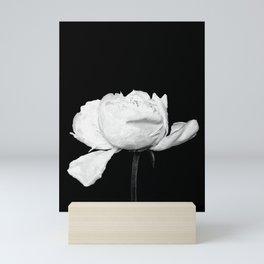 White Peony Black Background Mini Art Print