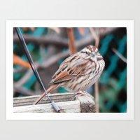 sparrow Art Prints featuring sparrow by ACamp