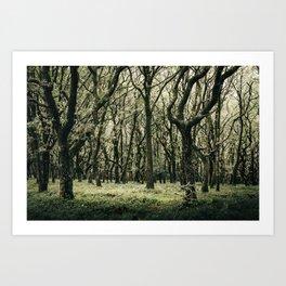 Moss Forest Art Print