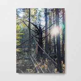 Old growth forest Vermont Metal Print