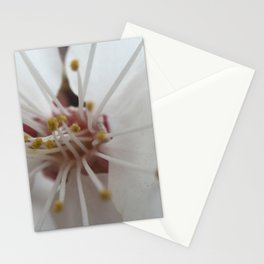 First Spring Stationery Cards
