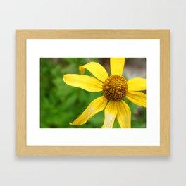 Wildflower Top Framed Art Print