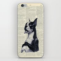 terrier iPhone & iPod Skins featuring Boston Terrier by autumnsensation