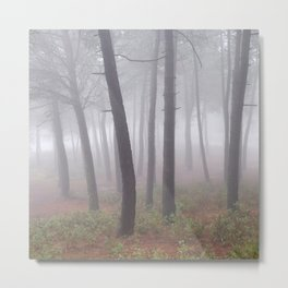 Dreaming.....wonderful Forest. Foggy Morning..... S. Huetor Natural Park. Metal Print