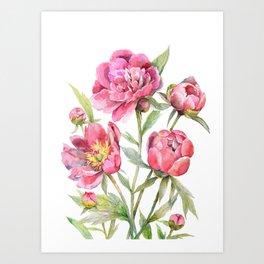 Peonies Watercolor Florals Botanical Design Art Print